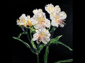 White Yellow Alstroemeriaceae