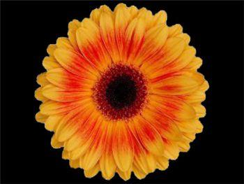 Divine Asteraceae