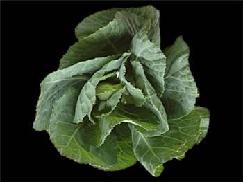 Green Brassicaceae
